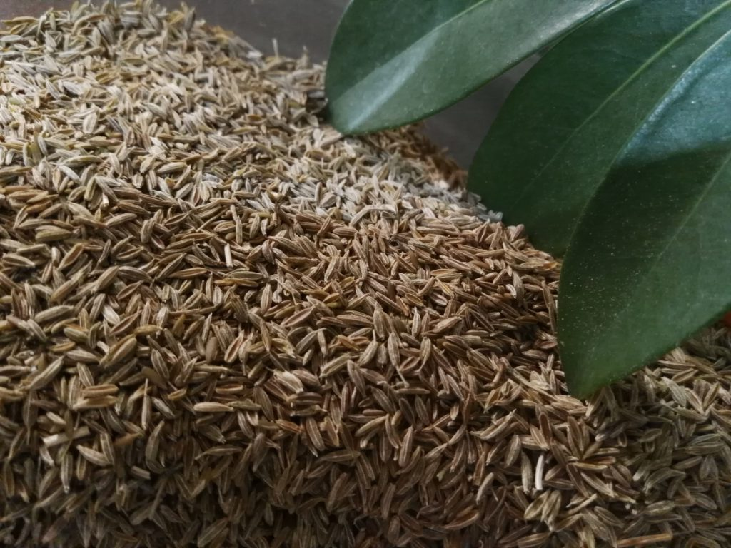 Powerful health benefits of cumin seeds